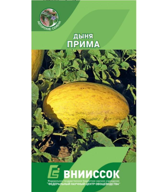Дыня Прима