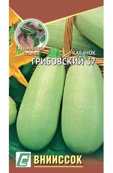 Кабачок белоплодный Грибовские 37